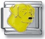 p-20877-Yellow-lab-head.jpg