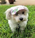 floral dog hat