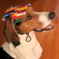 striped cap for dogs