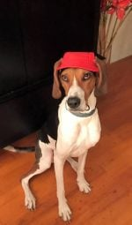 red dog cap