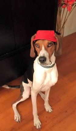 red dog cap
