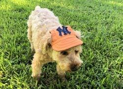 orange dog cap