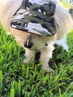 army fatigue dog hat