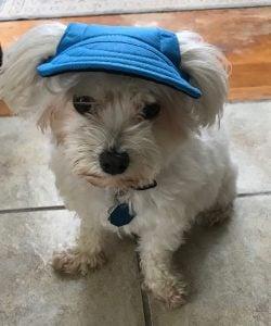 blue dog cap