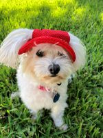 red hat for dogs